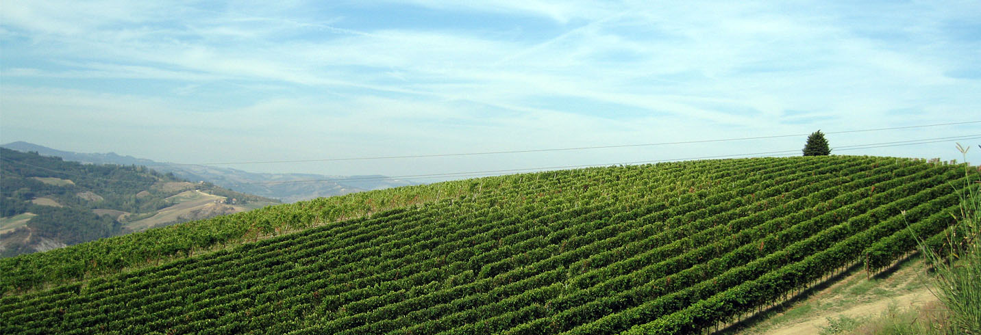 The Rolling Vineyards