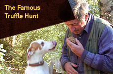 Participate in The Famous Truffle Hunt with Yummy Italy